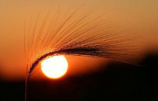sun-'s_eye
